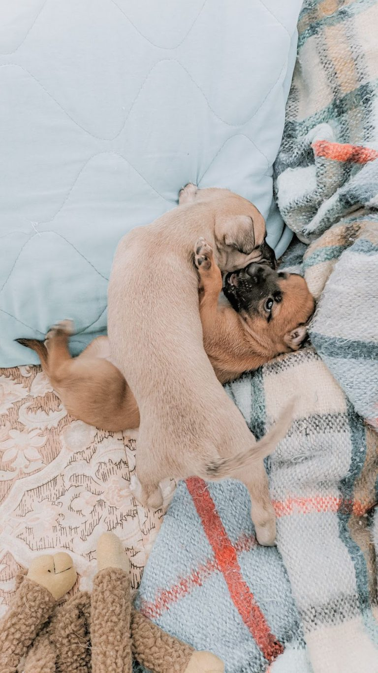Why Does My Dog Nibble On Blankets? Is Blanket Nibbling Harmful?