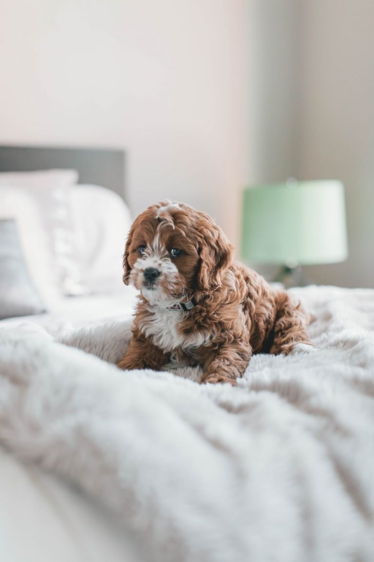 Why Are Dogs So Cute? Know if They Are Using It to Your Advantage