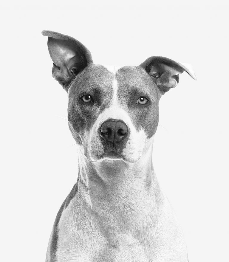 How to Register a Dog Without Papers? See What Options You Have