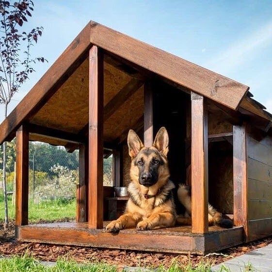 Dog House Ideas: Indoor and Outdoor Protection for Your Dog