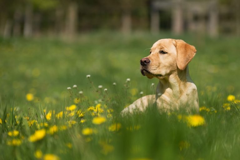 Why Are Dogs Always Hungry? 3 Tips on How to Stop Dog From Begging for Food