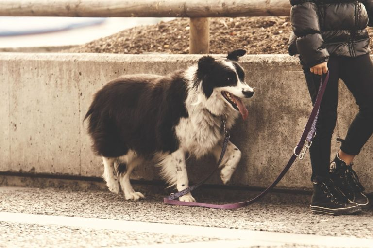 How Much Does a Dog Walker Charge? 8 Factors That Affect Dog Walkers Rate?