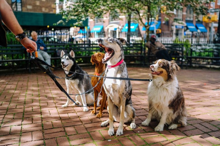 How Many Dog Breeds Are There in the World? 10 Groups of Canine That Exist