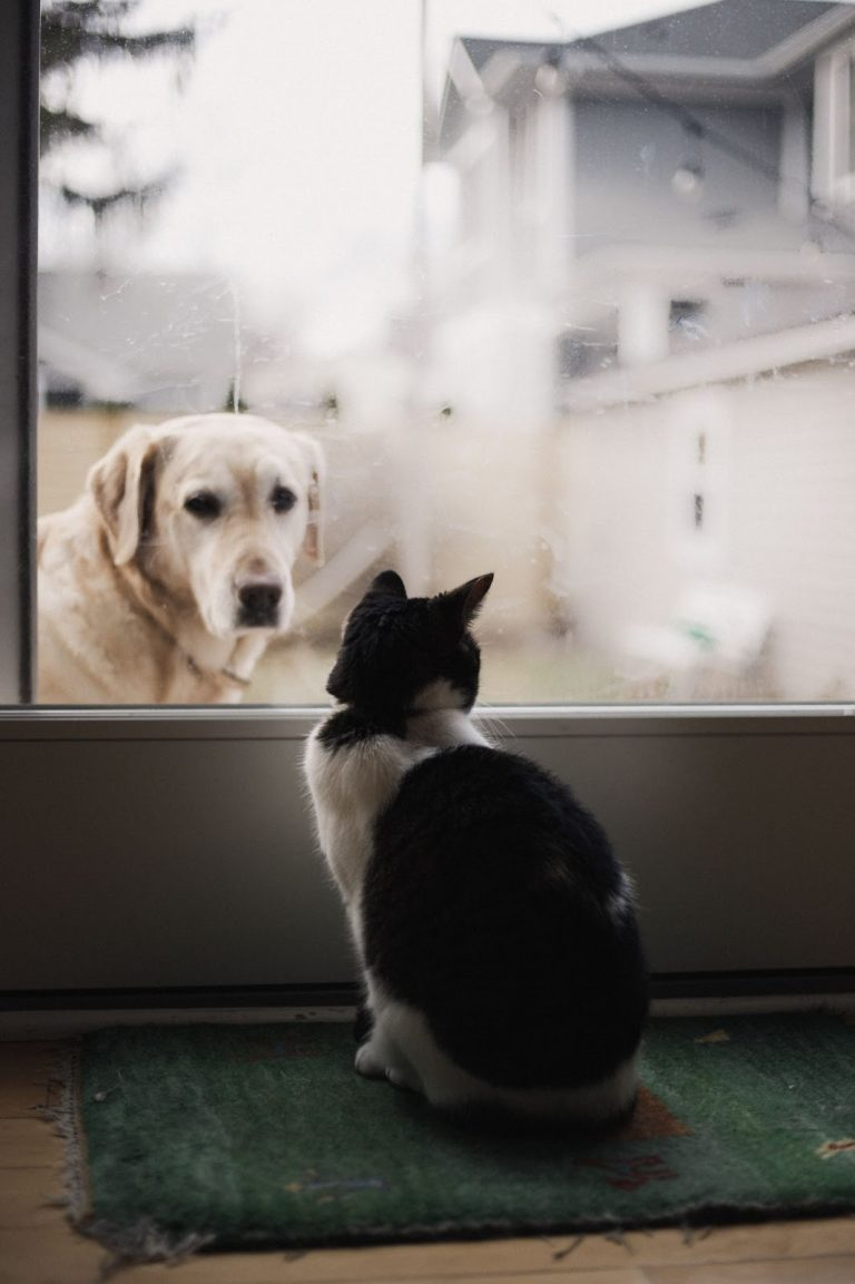 How to Keep a Dog Out of a Litter Box? 10 Proven Ways to Keep Dog From Eating Cat Poop