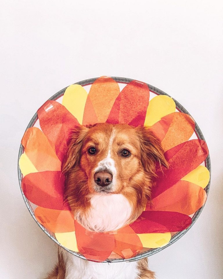 5 Dog Cone Alternatives That Makes Your Dog Comfortable