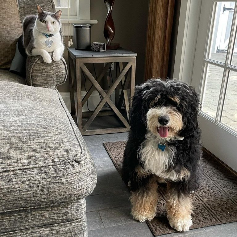 8 Tips on How to Get a Cat to Like a Dog