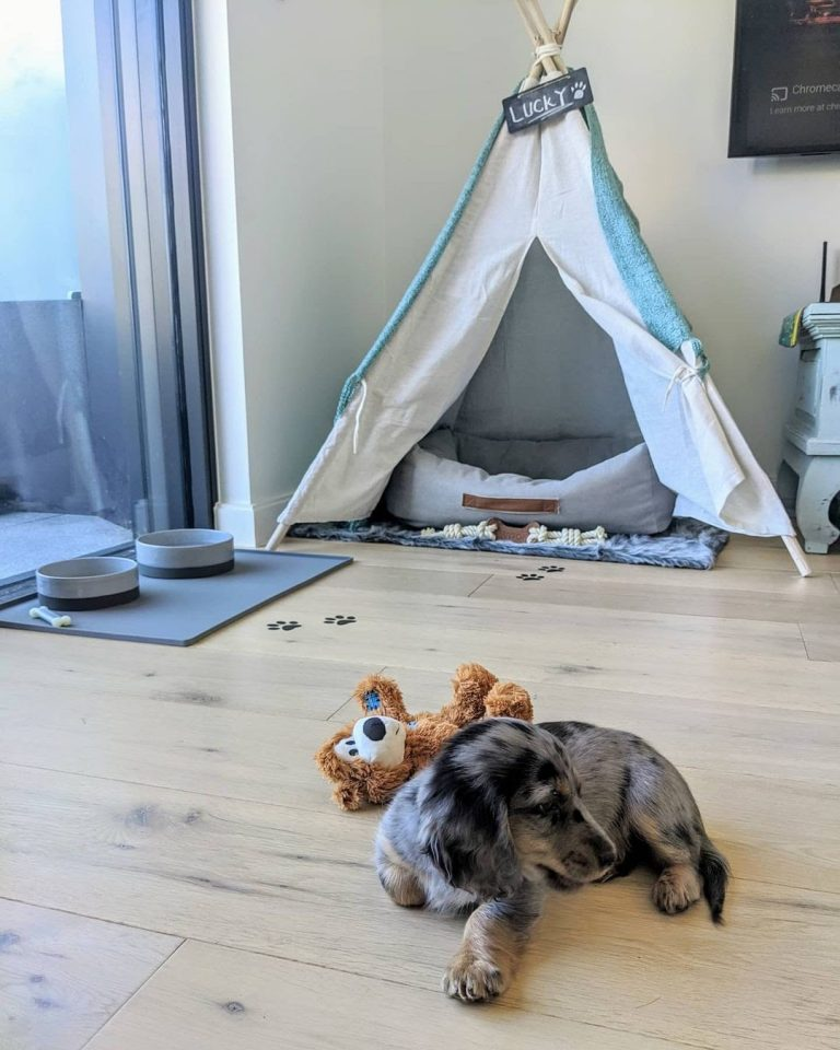 Dog Room Ideas About Decorating Your Pooch Bedroom & Pet Proofing the House