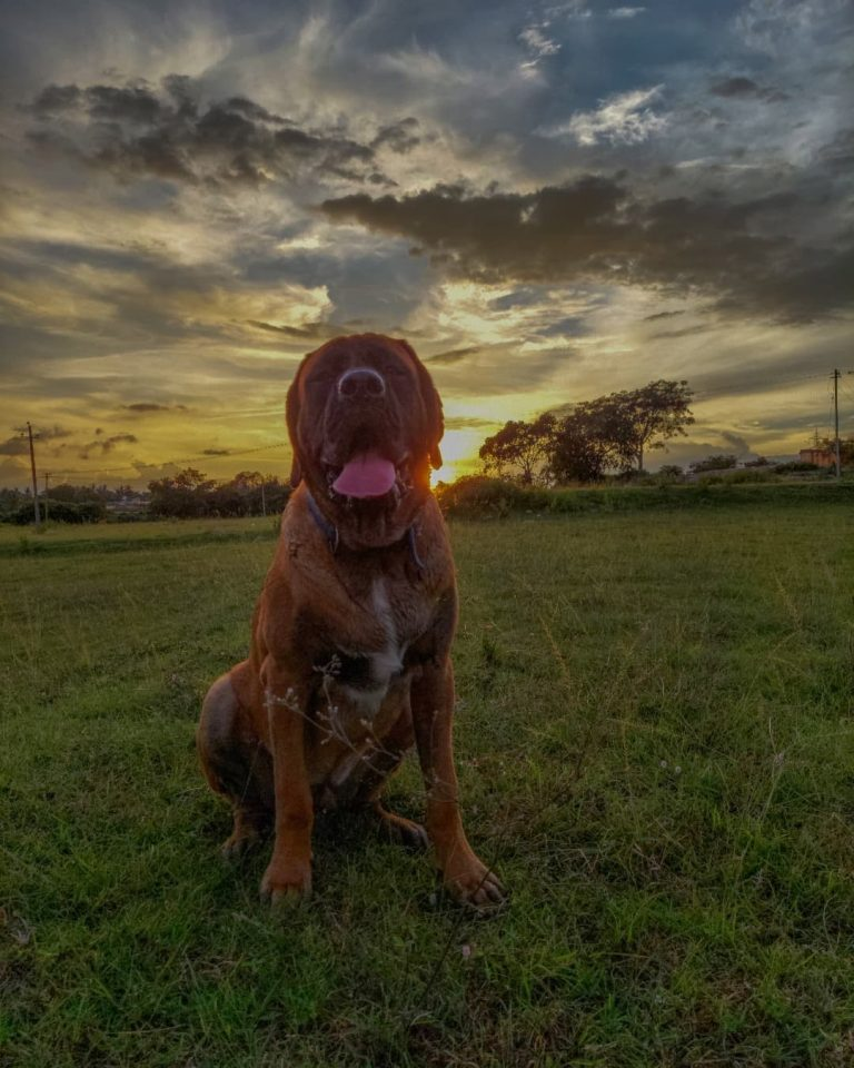 10 Best Dog To Protect You Against Coyotes