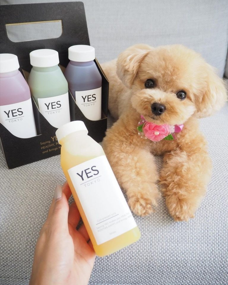 Poodle 101: The Essential Guide