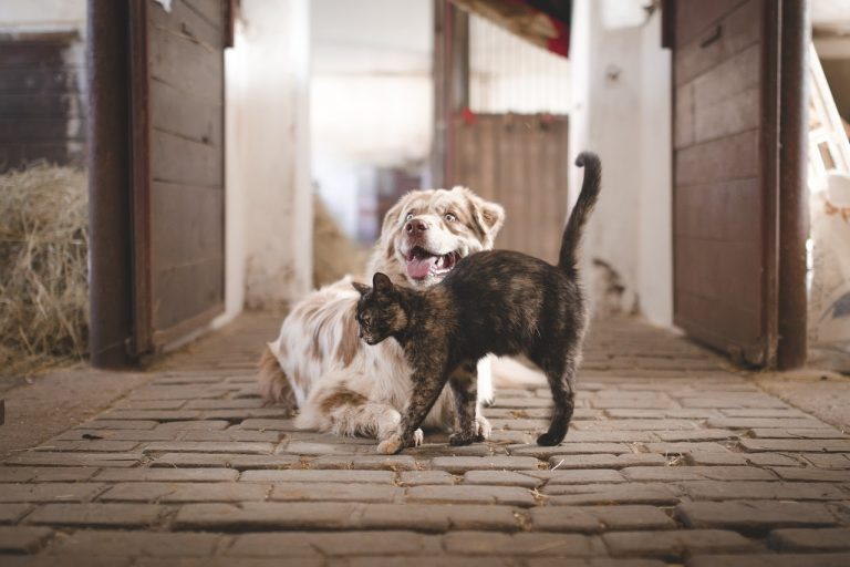 Why Do Dogs Kill Cats? 7 Ways to Stop Dog From Preying Cats