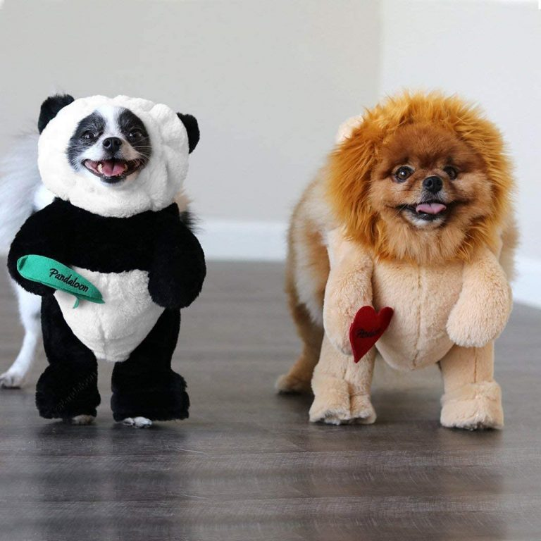 Top 15 Dog Costume Ideas for Any Occasion.