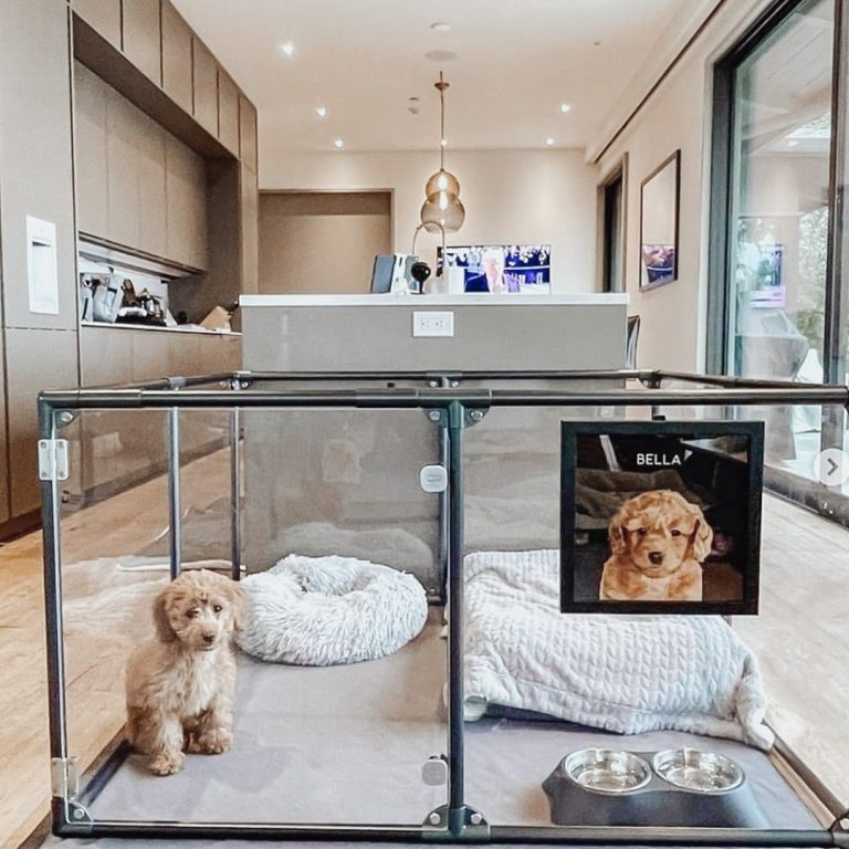 Most Affordable and Functional Kennel Ideas for Your Dog