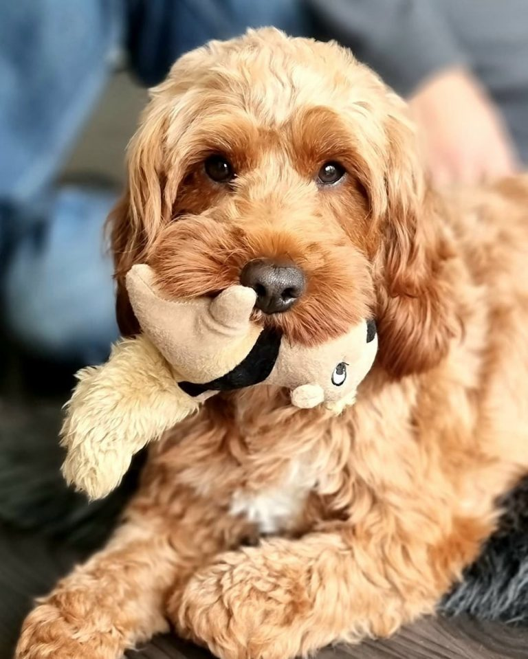 How to Teach Dogs Not to Destroy Toys: A Guide to Proper Behavior