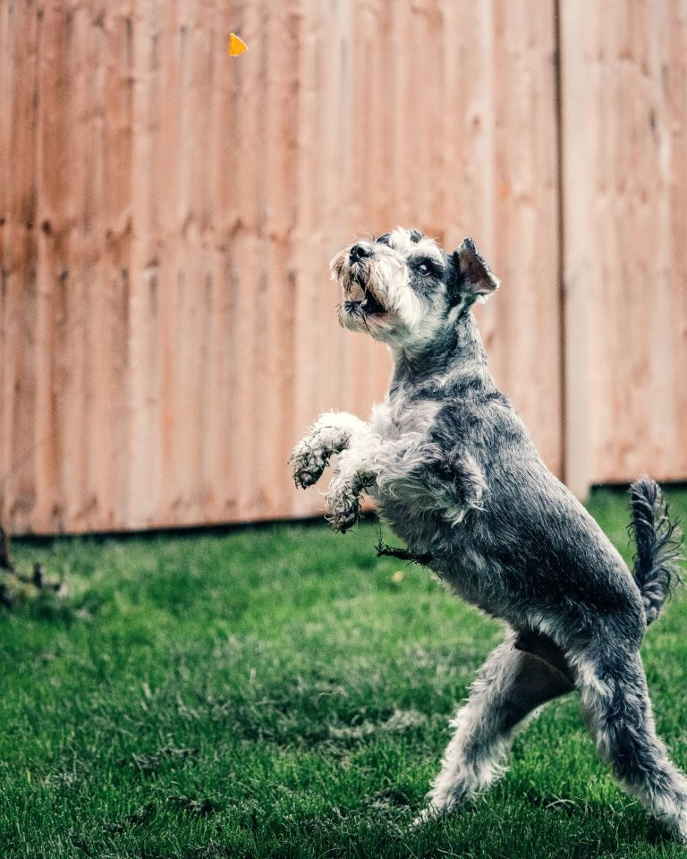 Awesome Backyard Landscaping Ideas for Dogs